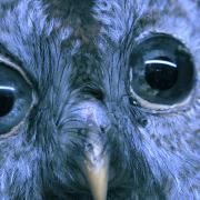 Chris Bierl – Die Versammlung der Vögel -Videostill02_ 2019-02-12 um 19.50.13