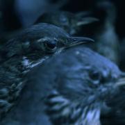 Chris Bierl – Die Versammlung der Vögel -Videostill 2019-02-12 um 19.48.27